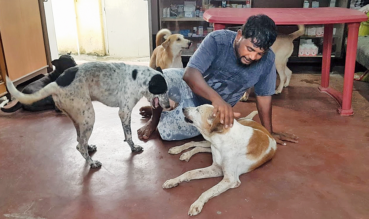 ngo for dogs